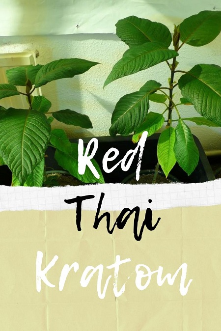 Red Thai Kratom
